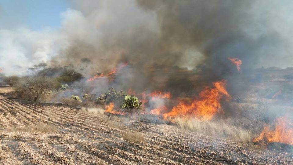 60 hectáreas son arrasadas por incendio en Norias de Ojocaliente