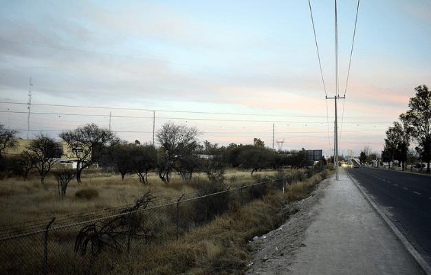 Autoriza Semarnat derribo de 221 árboles para la construcción de Outlet