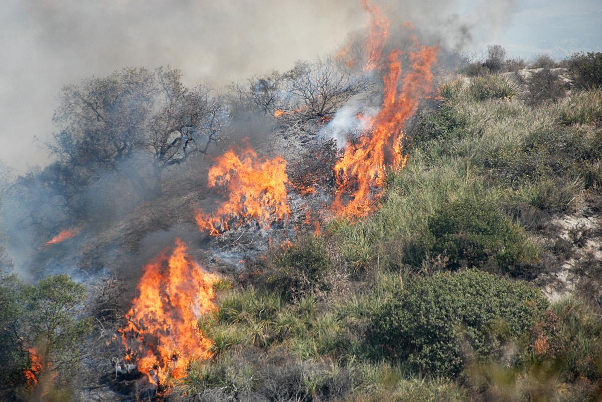 Voraz incendio en el Cerro de los Gallos
