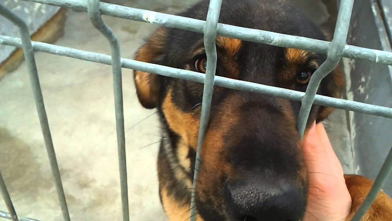 Propone diputada prohibir amputaciones estéticas a mascotas