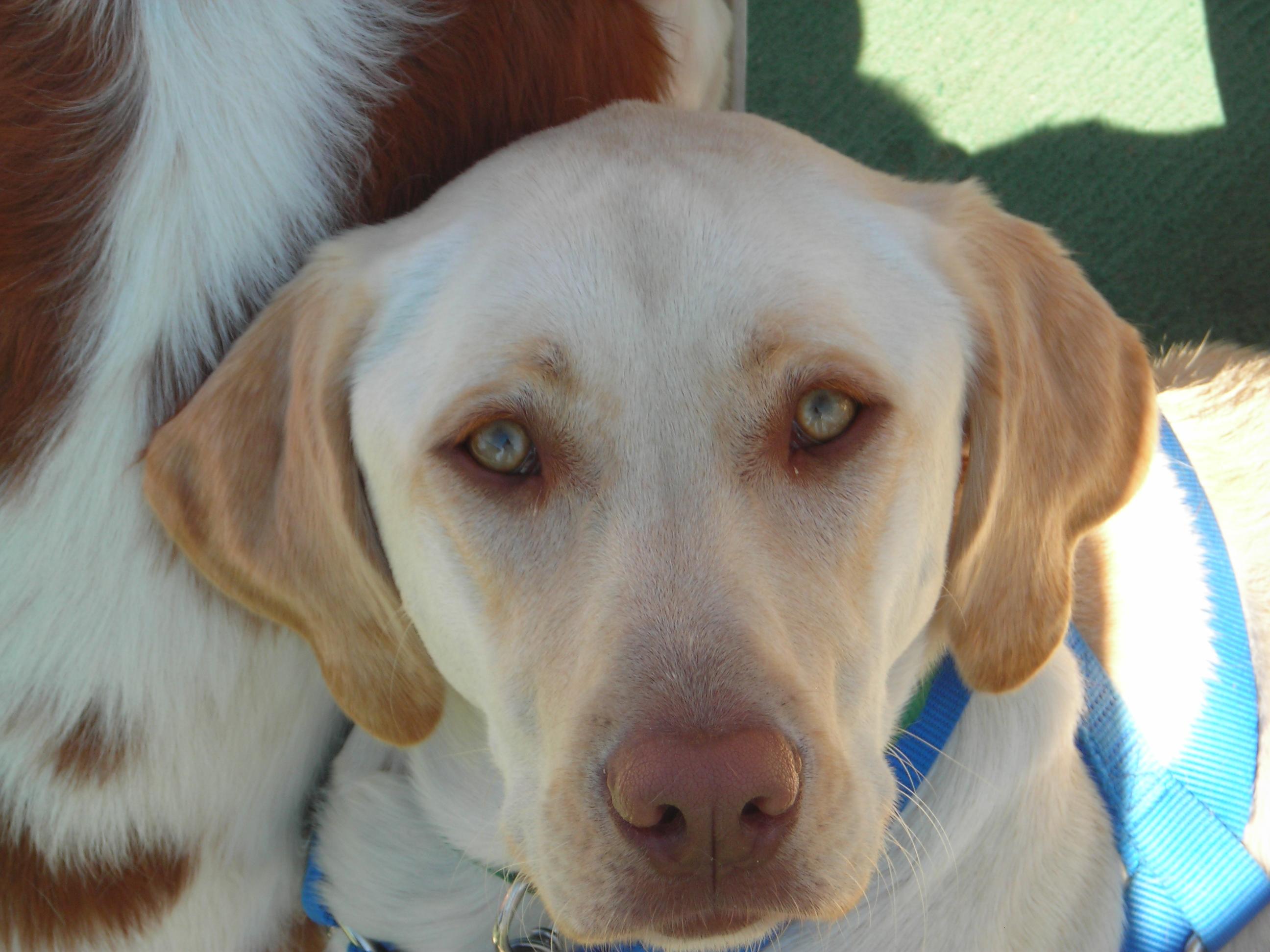 Semana nacional de vacunación antirrábica canina-felina