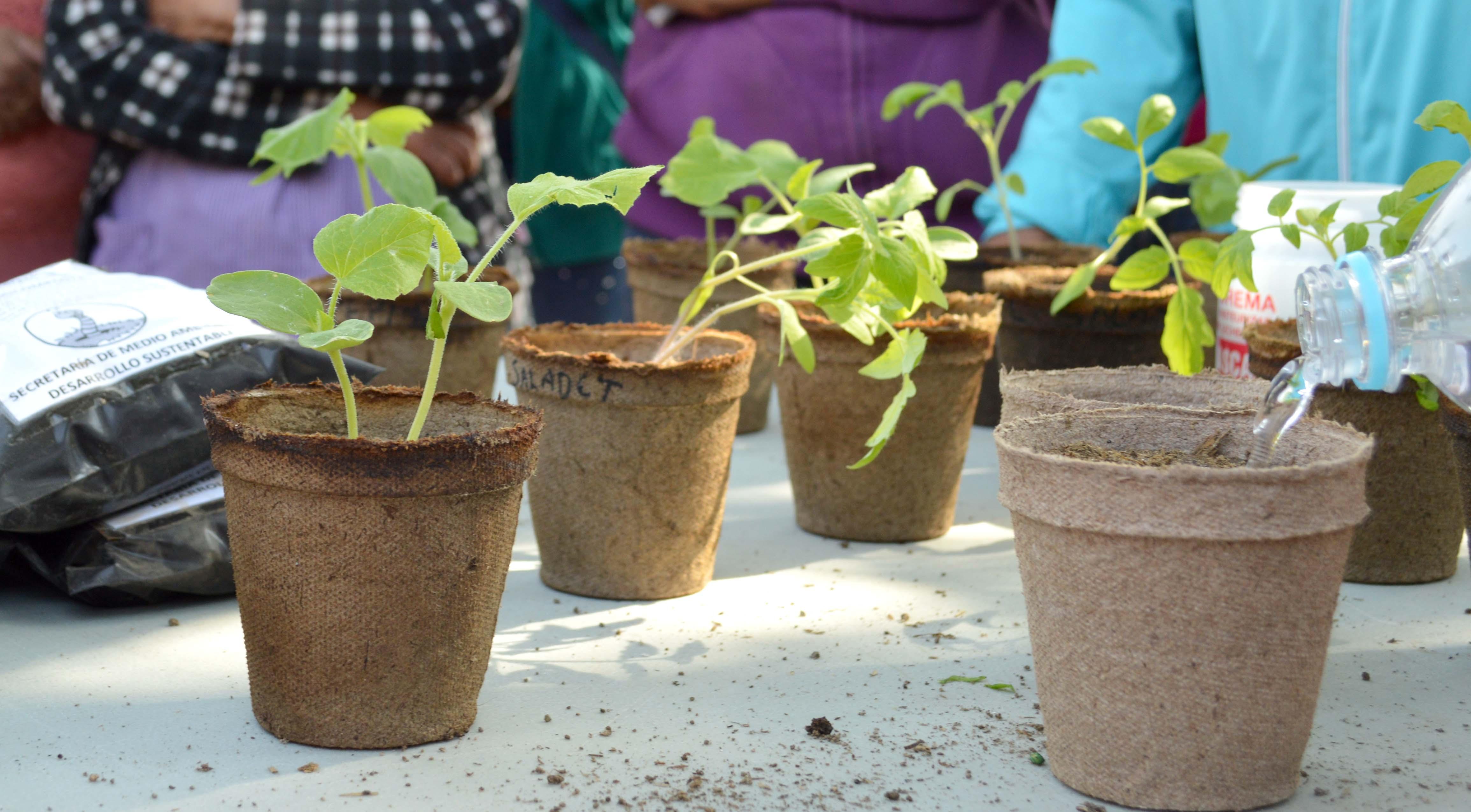 Integran al Jardín Didáctico área verde de material reciclado