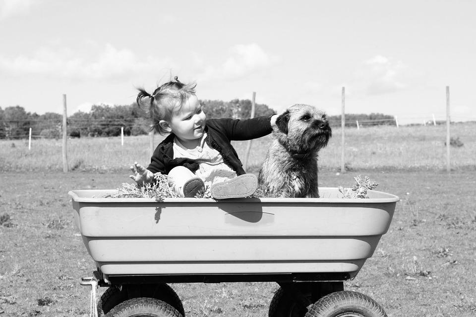 Agilizarían procesos de adopción
