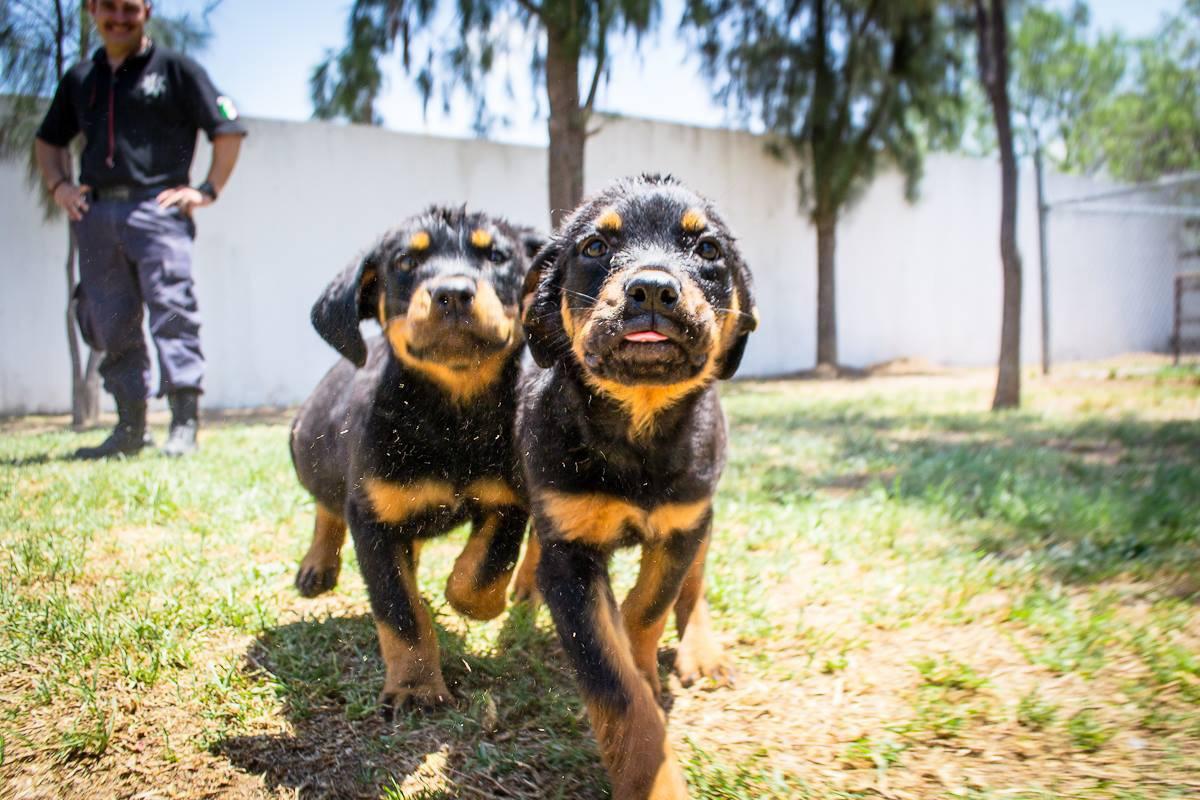 Alertan por epidemia que provoca tumores en perritos