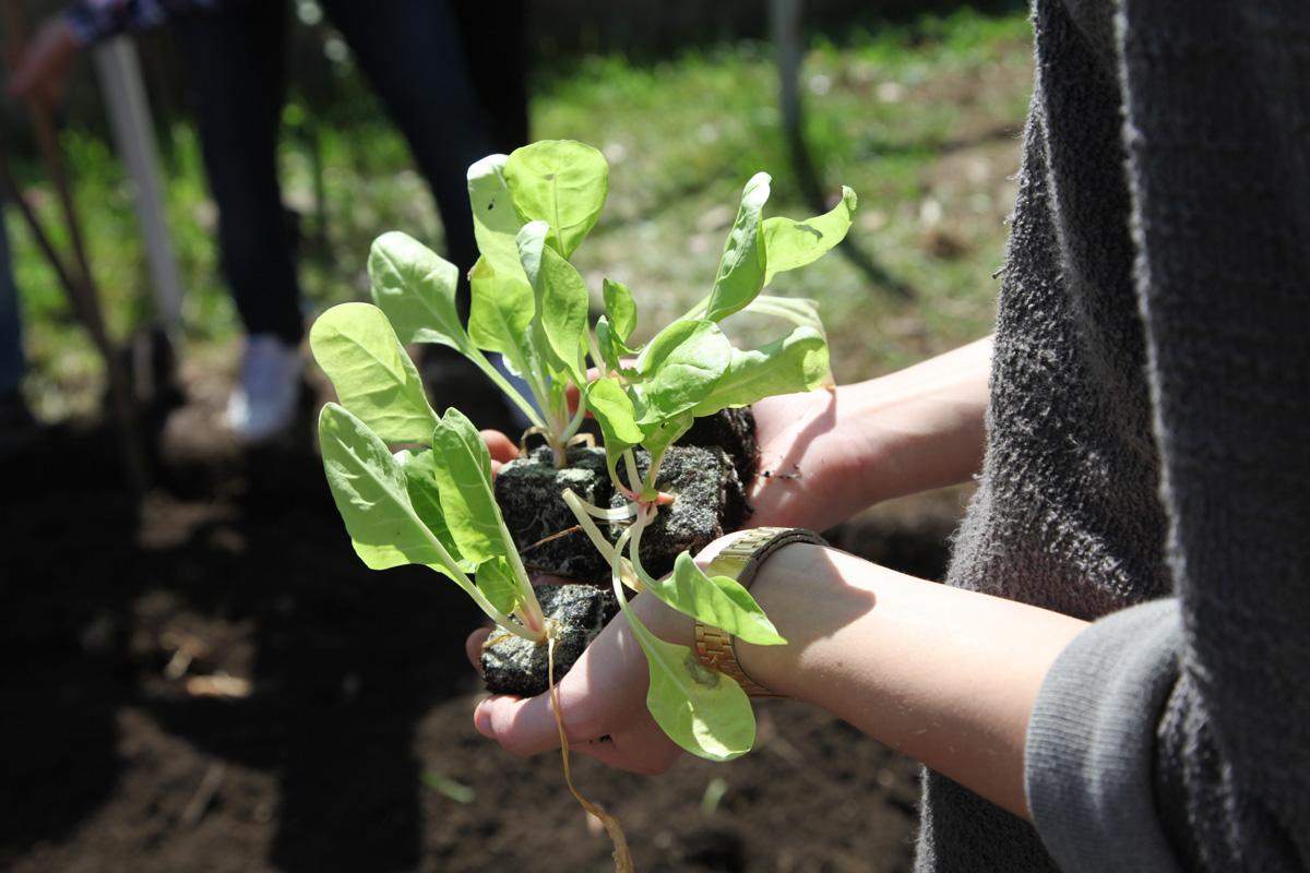A través de Conafor se sembraron 925 mil plantas en Aguascalientes