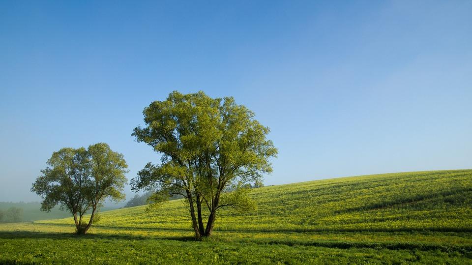 Hoy es día mundial del Medio Ambiente, aportemos a cuidar nuestro habitat y leamos el resumen del día