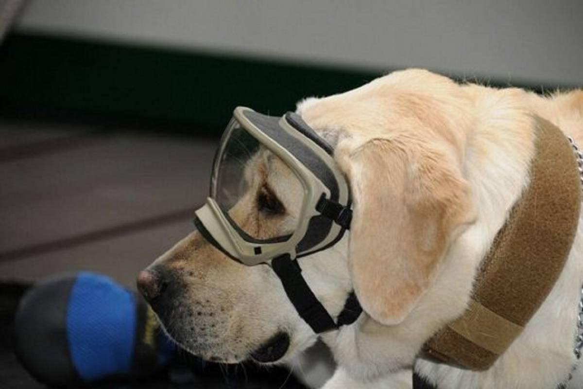 """La heroína canina """"Frida"""" ha rescatado ya a 56 personas"""