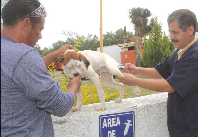 Es más barato esterilizar que sacrificar a los animales en el Centro de Control municipal