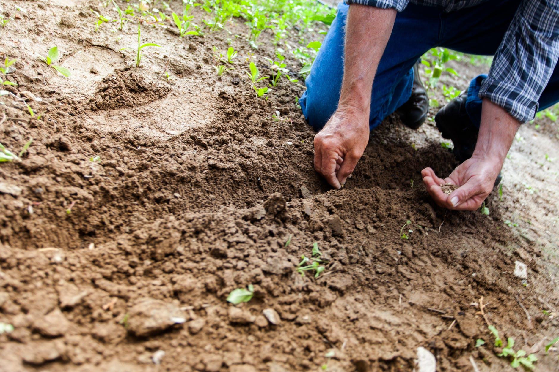 Pérdidas millonarias en el sector agrícola por bajas temperaturas