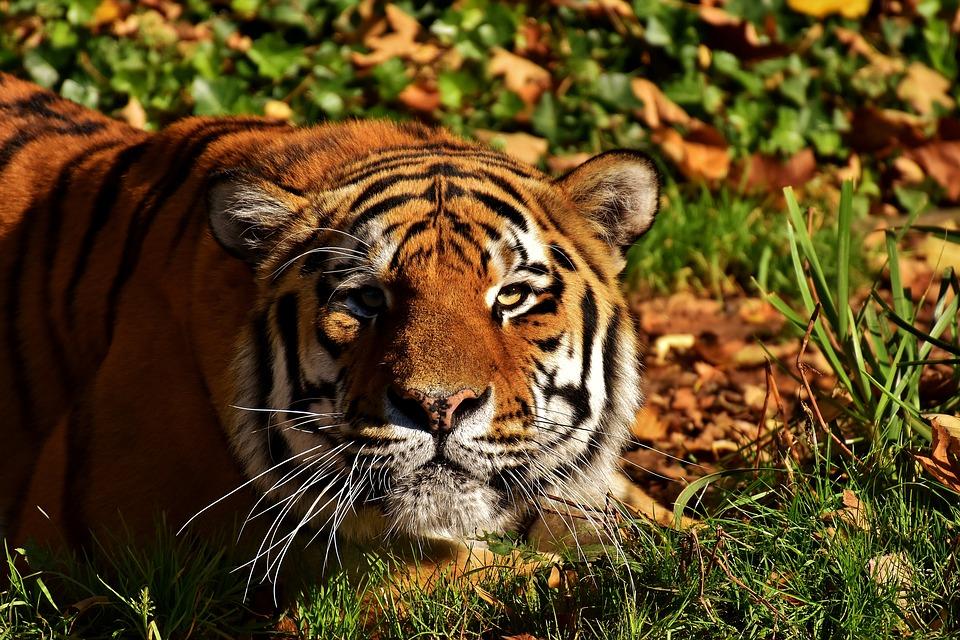 Proyectan hacer en Aguascalientes santuario para animales salvajes sin casa