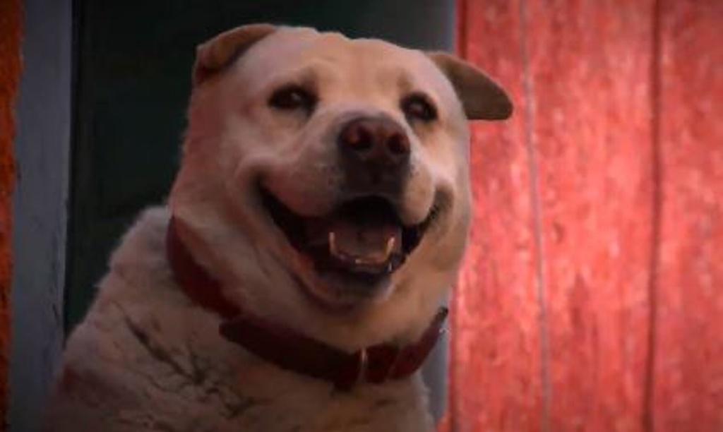 "Muere ""Benito"", famoso perro en Aguascalientes"